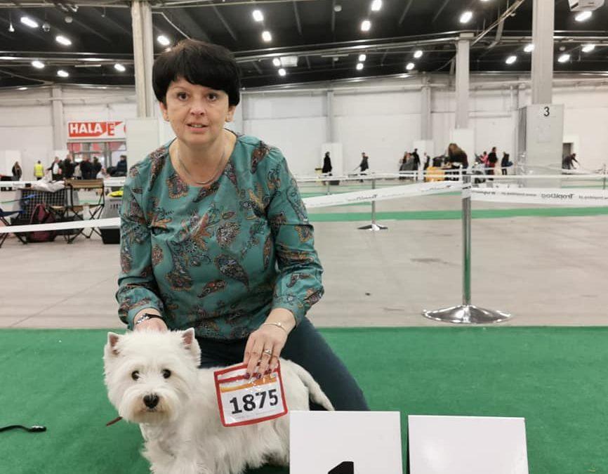 XVI Międzynarodowa Wystawa Psów Rasowych/ International Dog Show